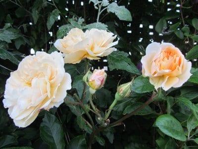 Spring Gardening Blog