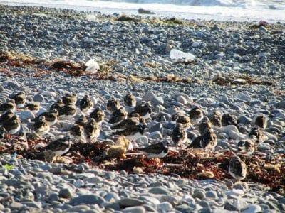 Birds resting on Rossall Beach