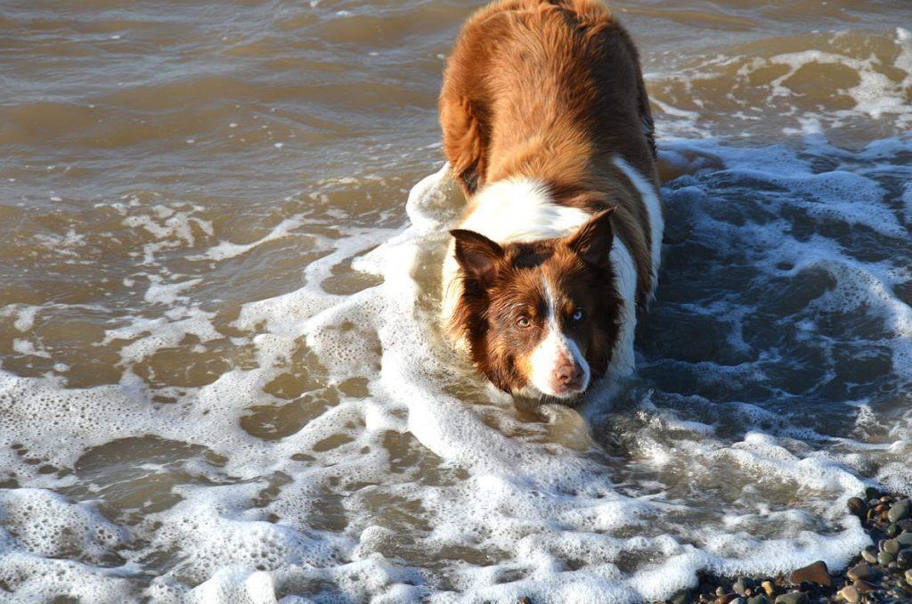 Walking dogs on Fylde Coast beaches