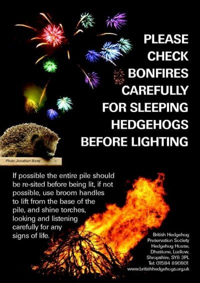 Check bonfires for sleeping hedgehogs. Bonfire night and your pet, with Vets4Pets Cleveleys