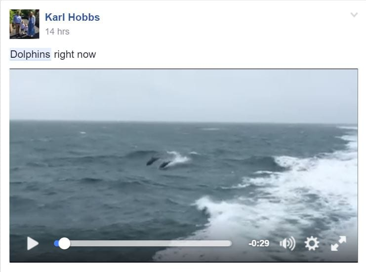 Karl Hobbs dolphin video June 2016