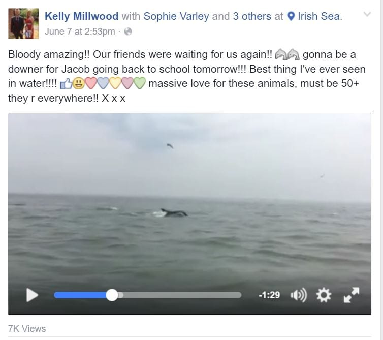 Video of Dolphins swimming offshore