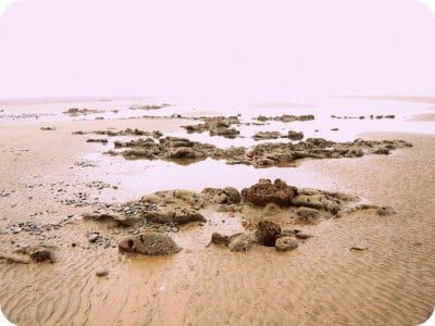 Petrified forest Cleveleys