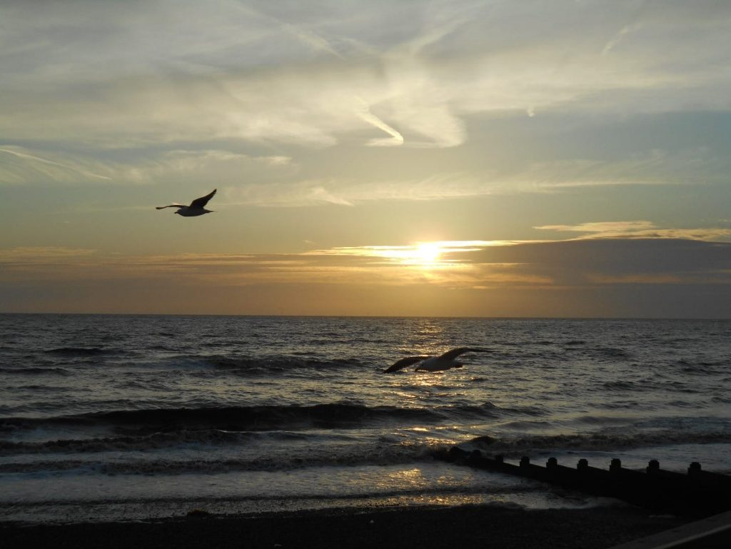 Seagull at sunset. Photo: Maria Potter