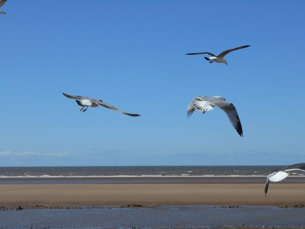 Seagulls flying. Photo: Maria Potter