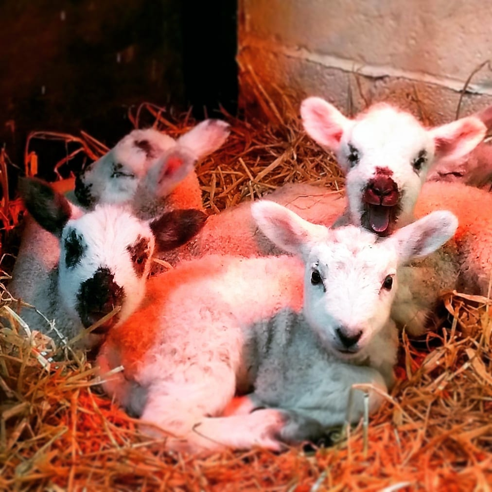 Baby animals at Farmer Parr's animal world, Fleetwood