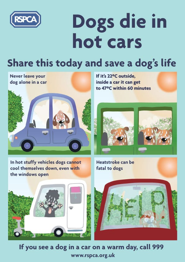 RSPCA Advice - dogs in hot cars