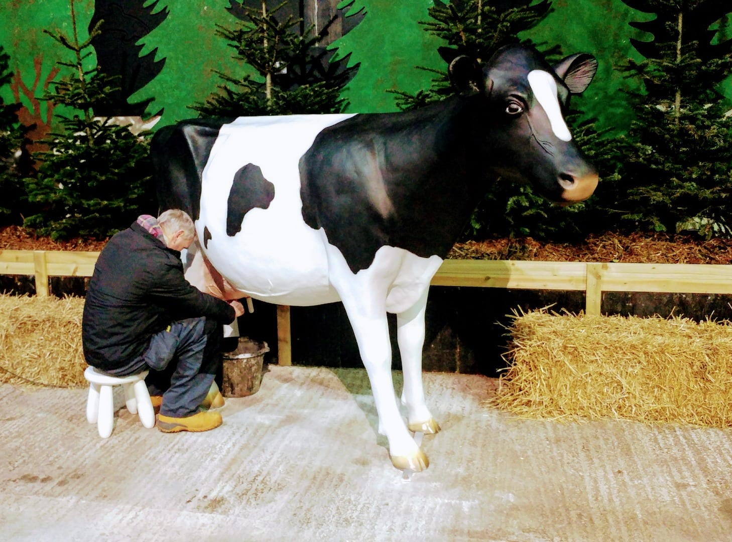 Meet Daisy the Dairy Cow at Farmer Parr's
