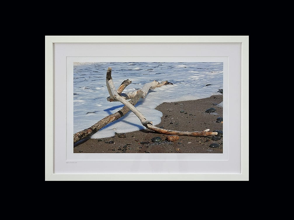 Driftwood washed ashore, photo print from Seaside Emporium