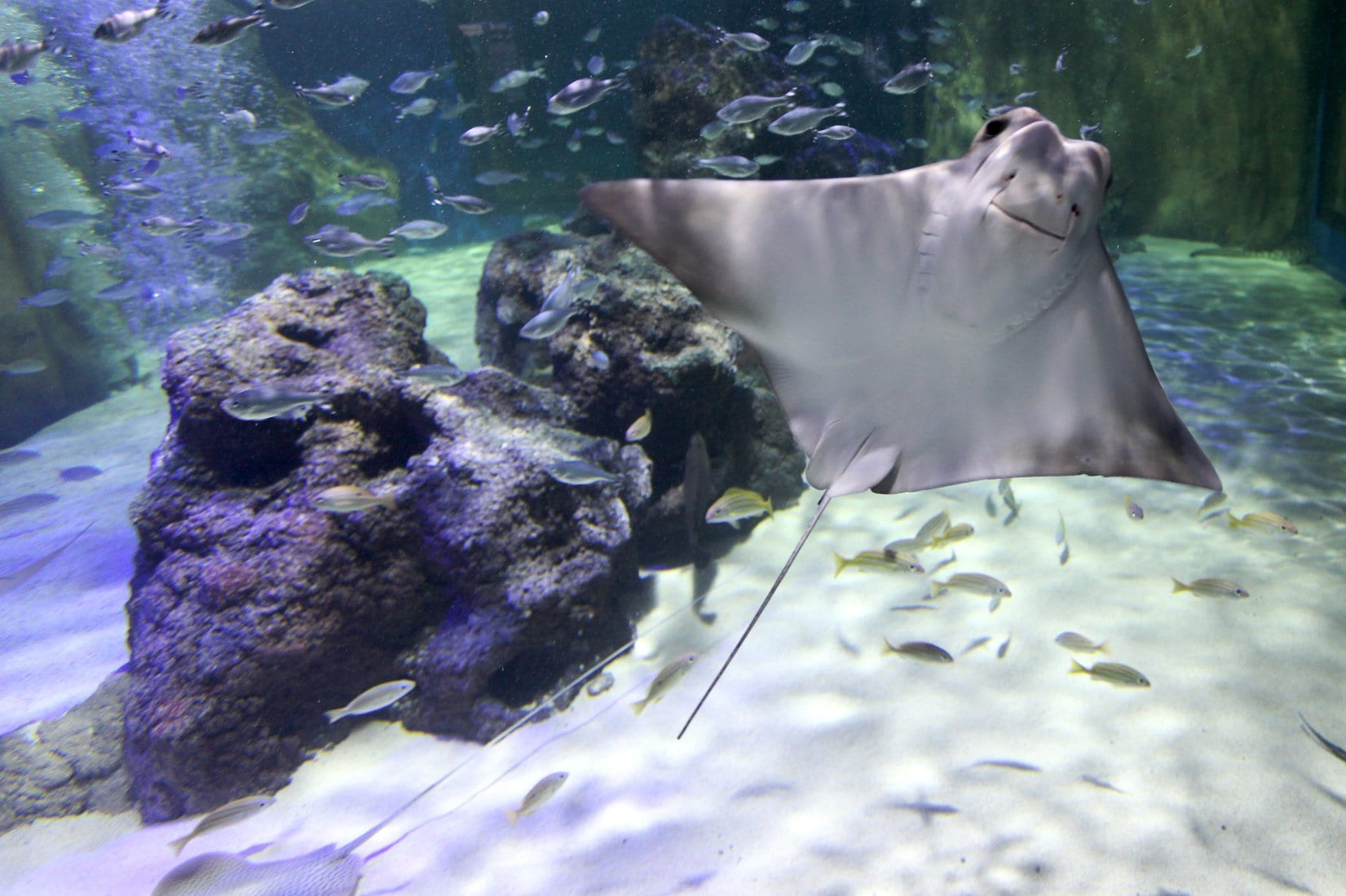 Rays at SEA LIFE Blackpool