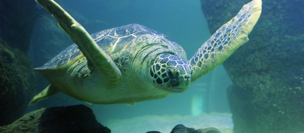 Lulu the Turtle at Sea Life Blackpool