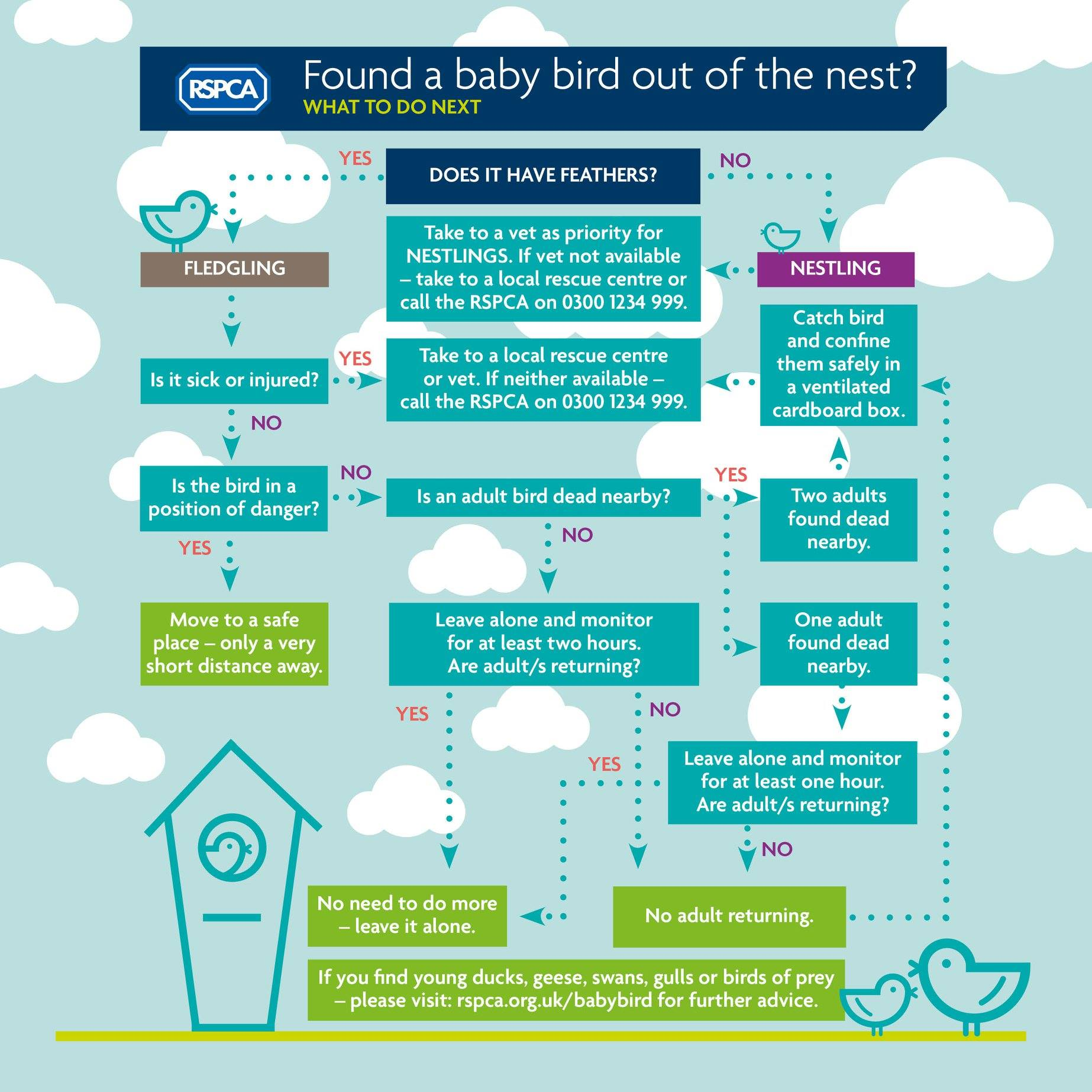 What to do if you find a baby bird out of the nest. Vets4Pets Cleveleys