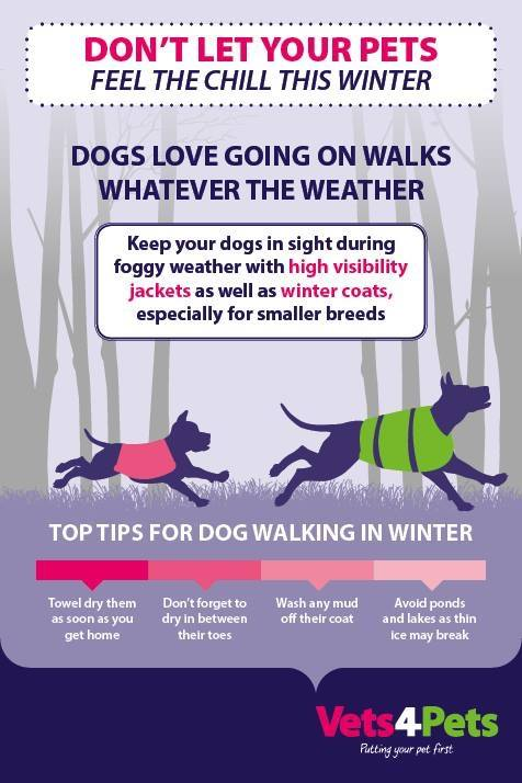 Walking dogs in winter with Vets4Pets Cleveleys