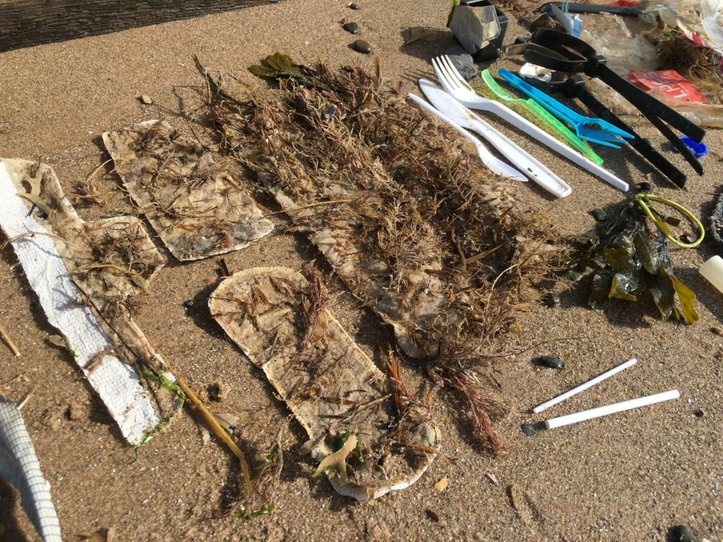 Sanitary waste becomes a new home for seaweed