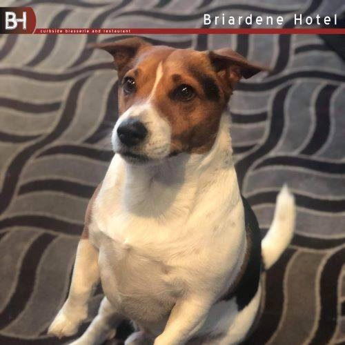 Pet Friendly at the Briardene Hotel