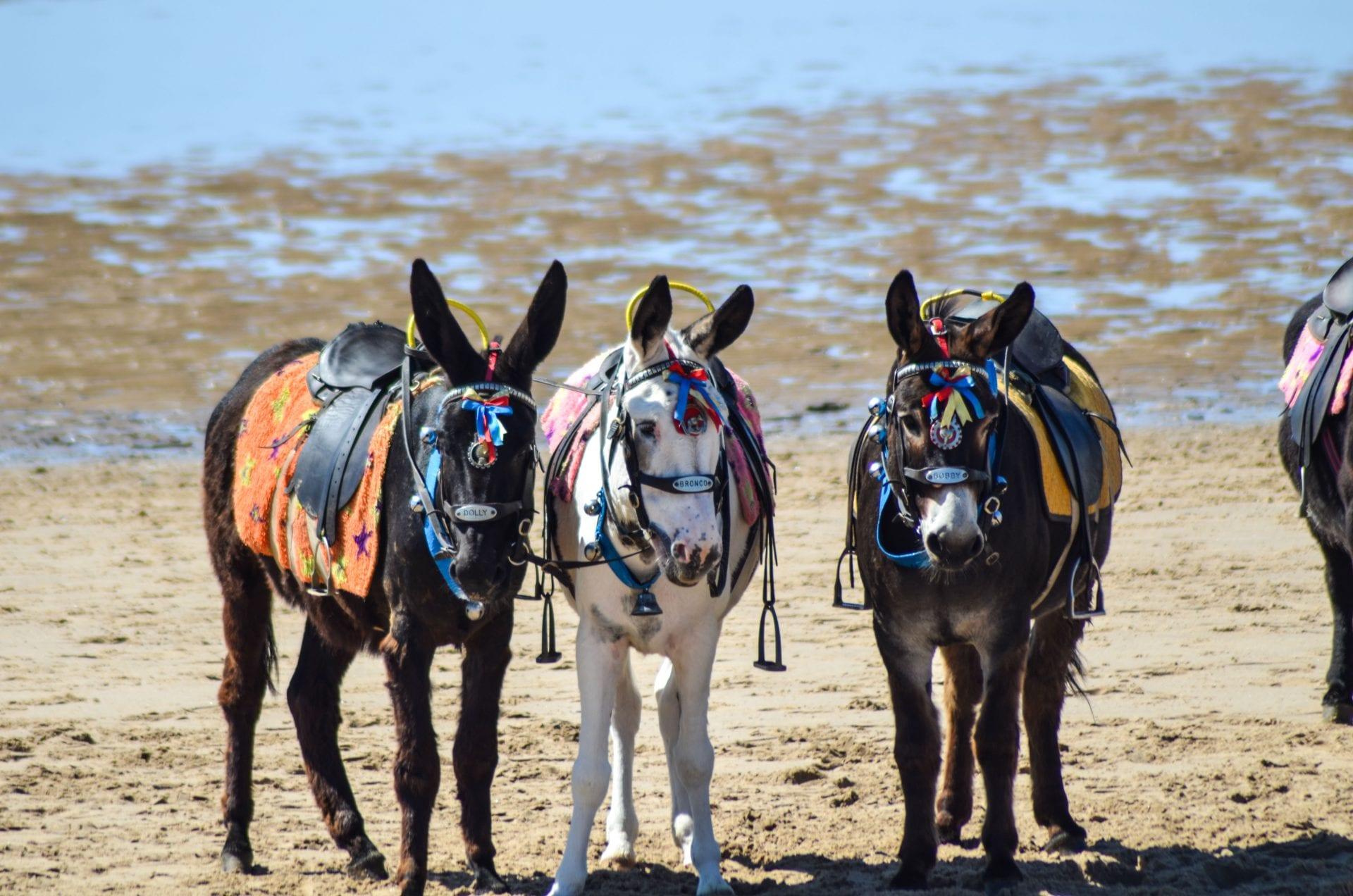 Seaside Donkeys • Visit Fylde Coast