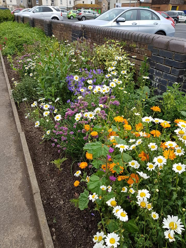 Flower bed on Rough Lea Road