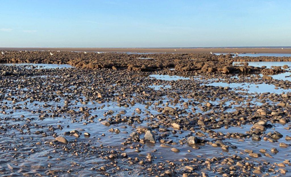 Honeycomb worm reef on Cleveleys beach