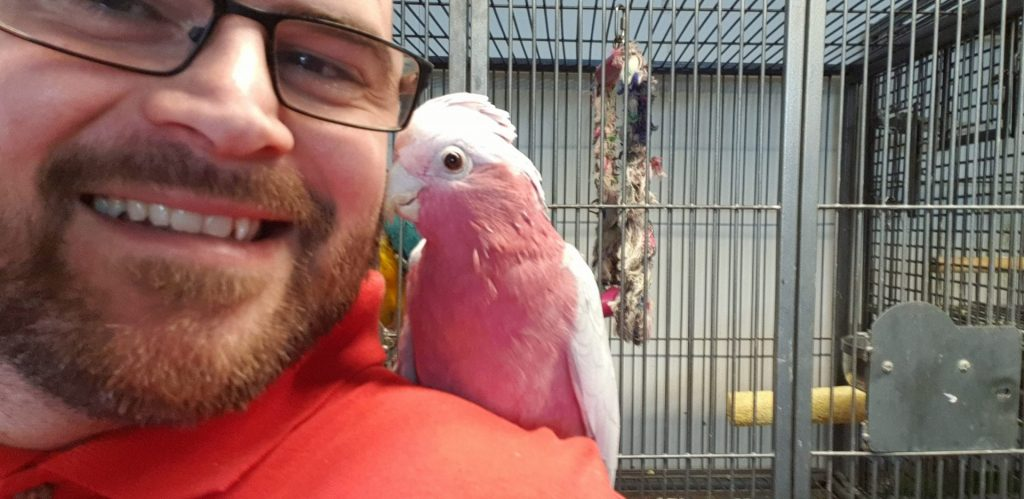 Volunteer at Birdman Parrot Rescue