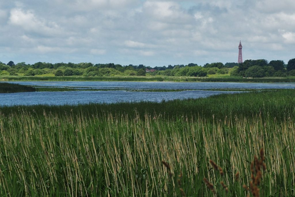 Marton Mere with Blackpool Tower in the distance. Photo: Sue Massey